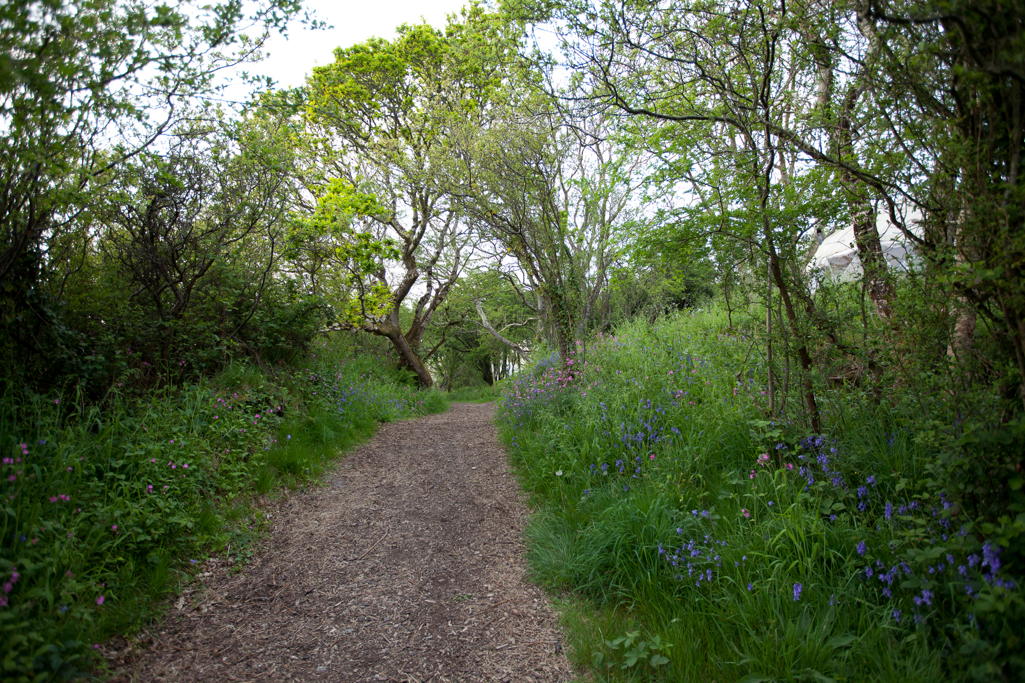 Pathway with bluebells. By Leonie Wise