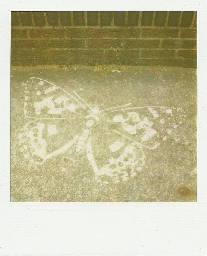 polaroid sx-70, 779 film by leonie wise