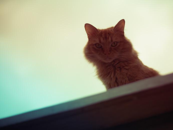 lemoncat2
