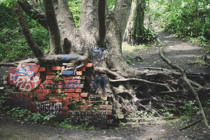 bricks and roots - parkland walk, north london (c) leonie wise