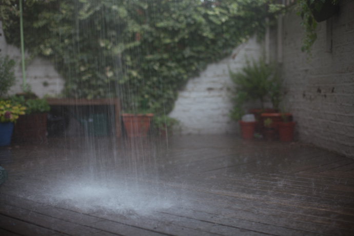 rain in the backyard - photo by leonie wise