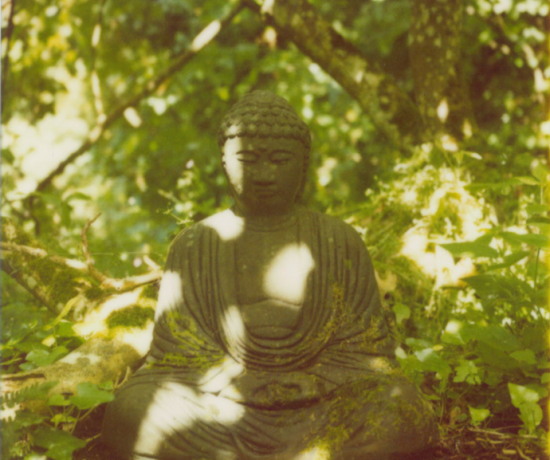 buddha statue amongst green trees