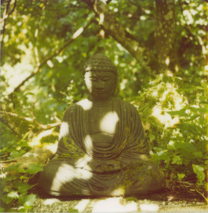 buddha statue amongst green trees
