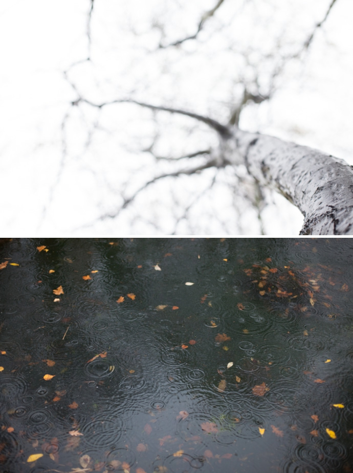dyptic of photographs - one looking up a tree, the other of rain drop circles in a pond.
