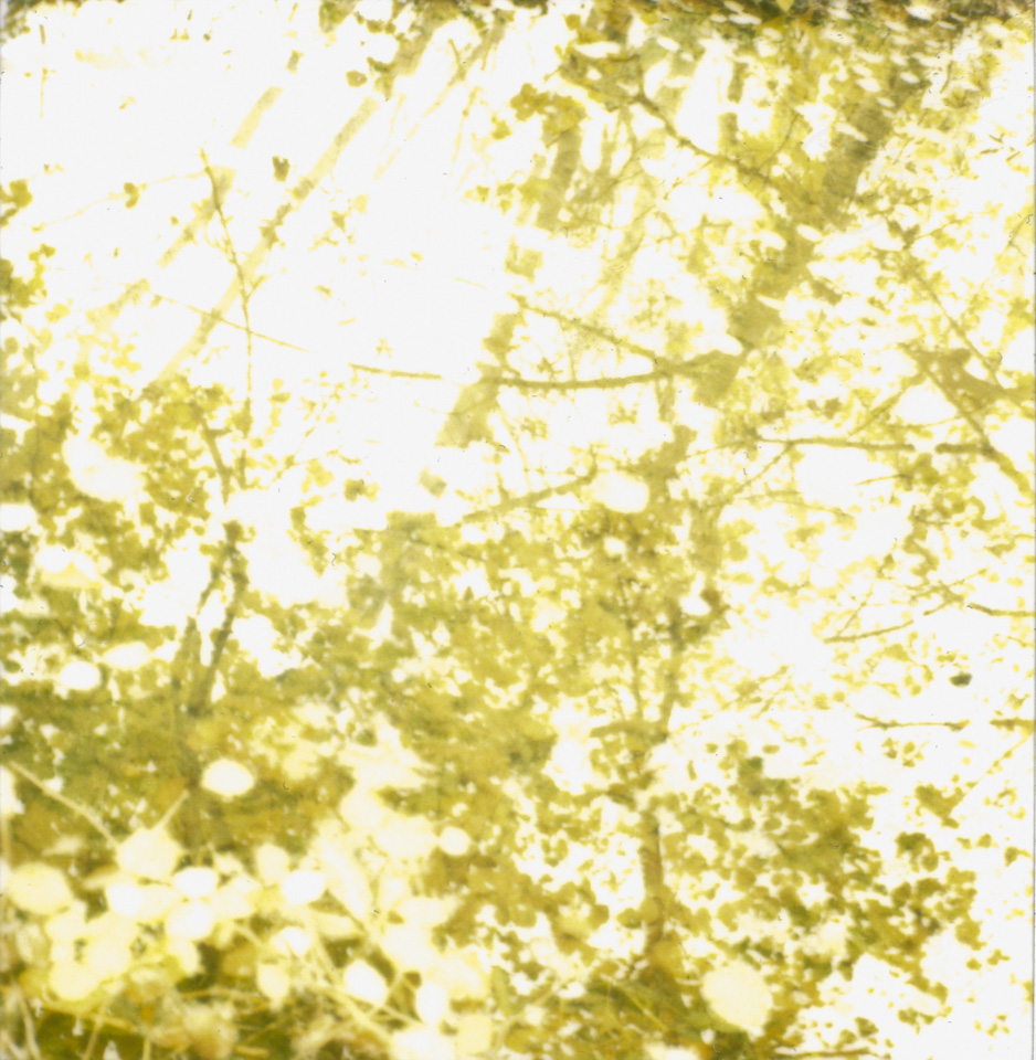 polaroid photograph of trees reflected in water. copyright leonie wise