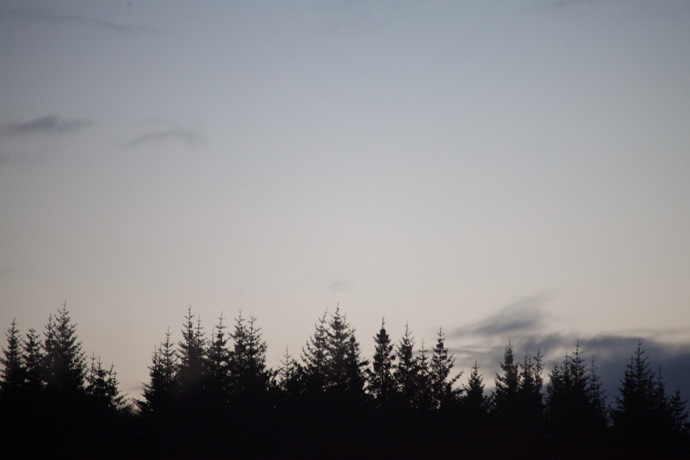 tree line. reykjavik, iceland. copyright leonie wise