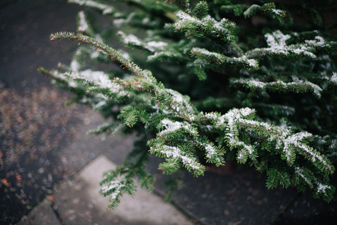 bottom of a christmas tree, lightly dusted with snow. copyright leonie wise