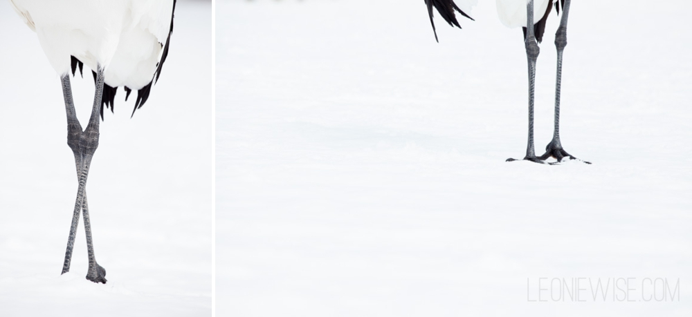 red-crowned crane legs in the snow. copyright leonie wise - all rights reserved