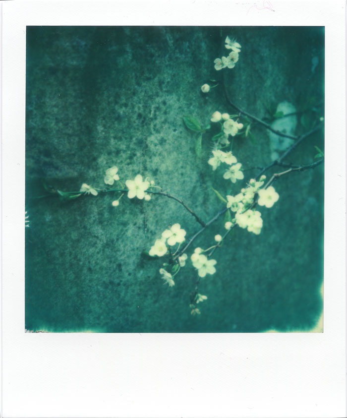 sx-70_px-70_impossibleworkshop-blossoms