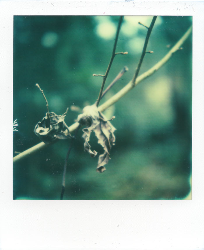 sx-70_px-70_impossibleworkshop-leafdecay