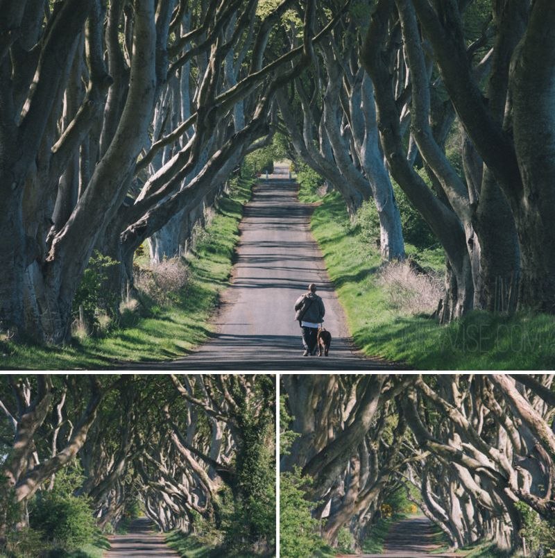 the dark hedges northern ireland - CC-BY-NC-ND leonie wise