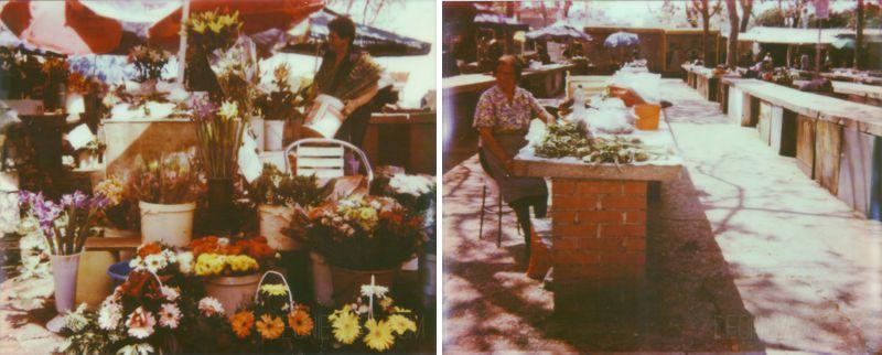 spectra_pz680_croatia-flowermarket