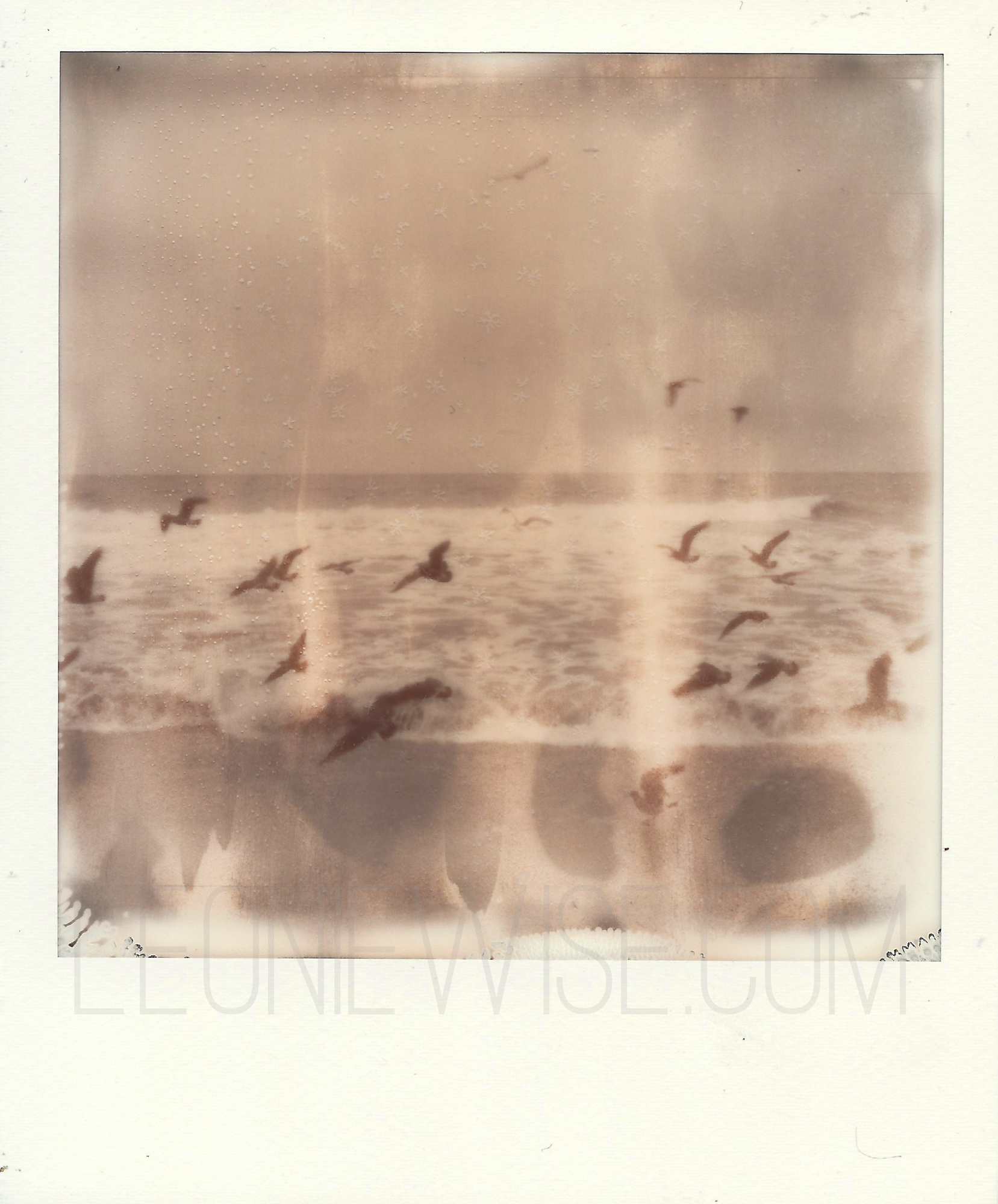 polaroid sx-70, impossible project px100 silvershad film. birds in flight. copyright leonie wise