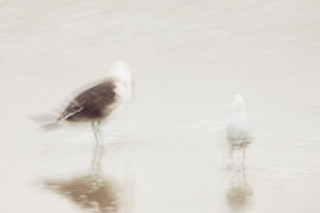 seagulls-palm-beach-waiheke-island-1