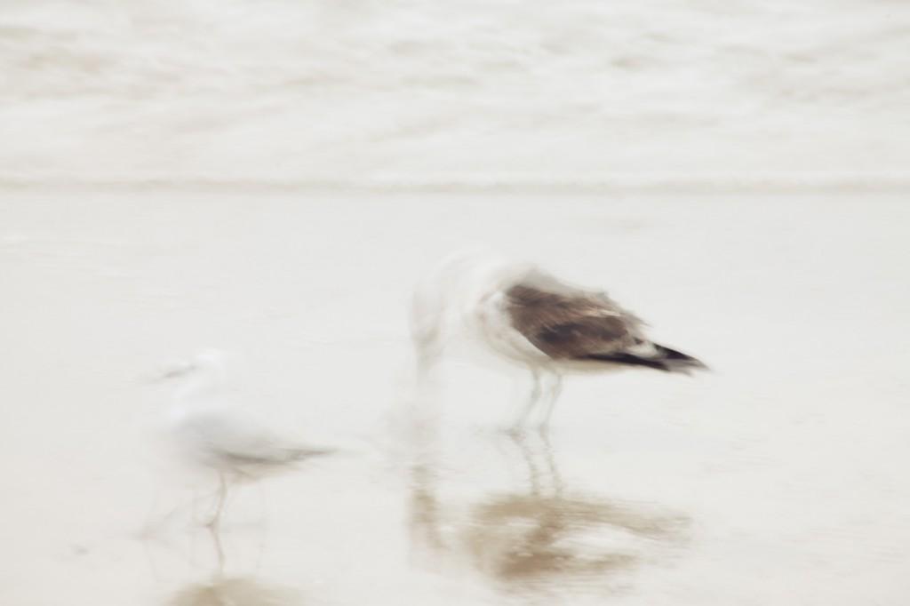 seagulls-palm-beach-waiheke-island-2