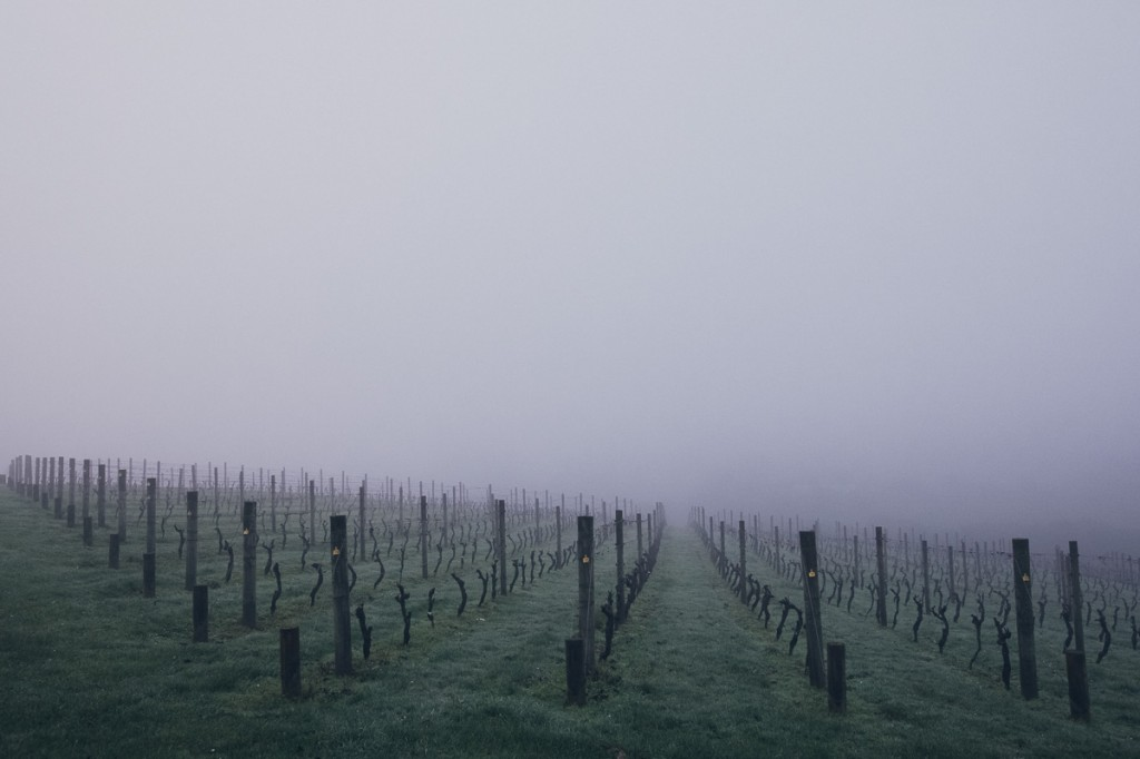 morning-fog-goldie-vineyard-chardonnay-block-1