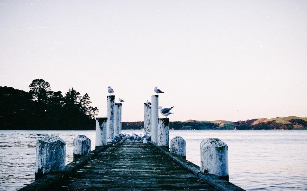 seagulls, orapiu, waiheke island