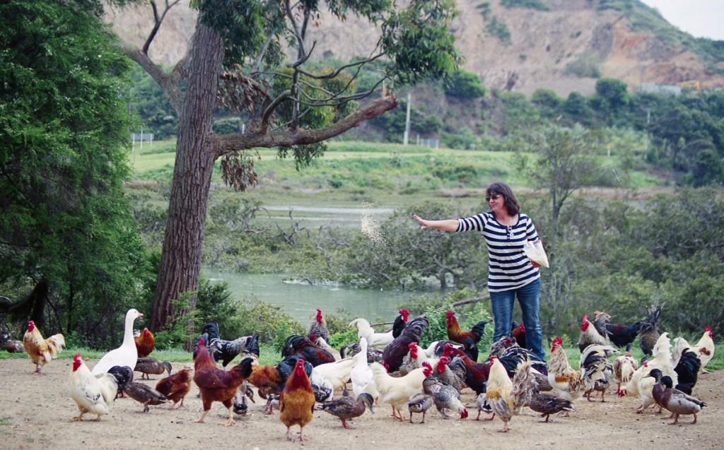 my sister daphne feeding the roosters, waiheke island (c) leonie wise