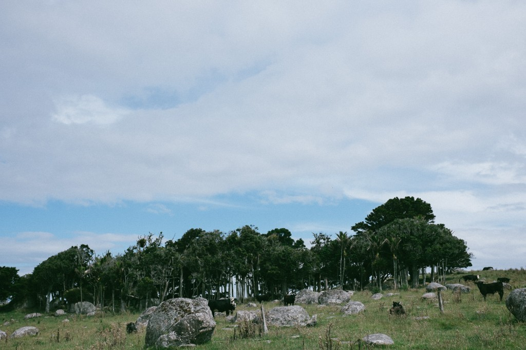 opopo-bay-waiheke-island-2