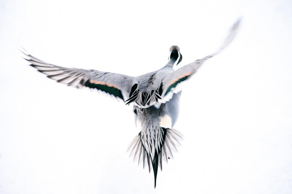 taking-flight-hokkaido-2
