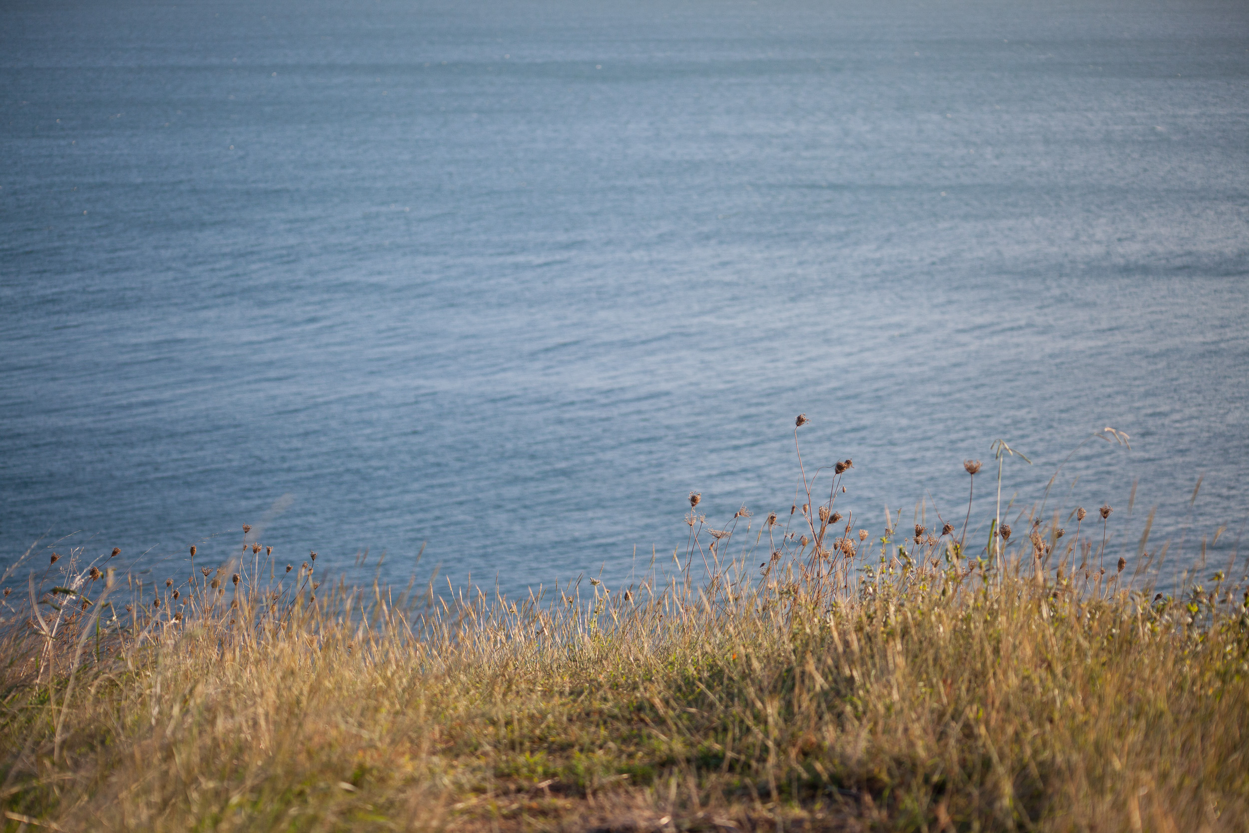 headland - grasses looking out to sea by leonie wise