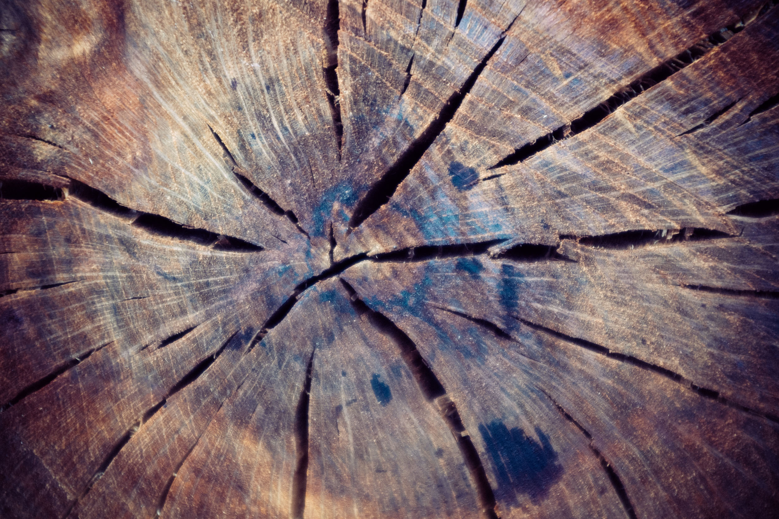tree stump detail. copyright leonie wise