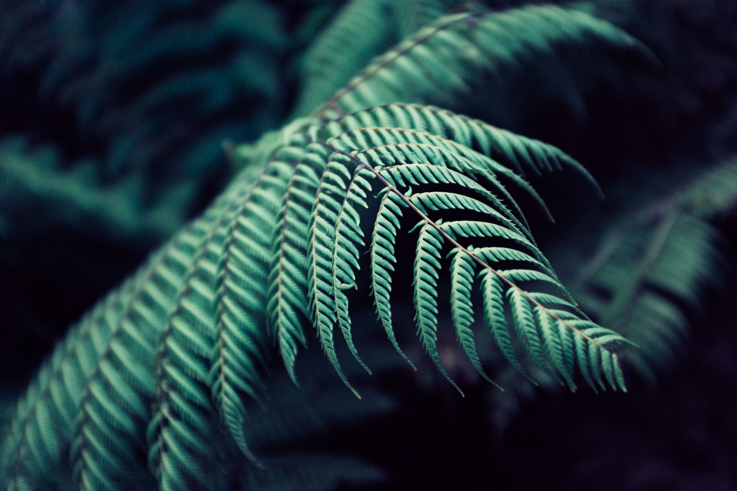 fern frond. copyright leonie wise
