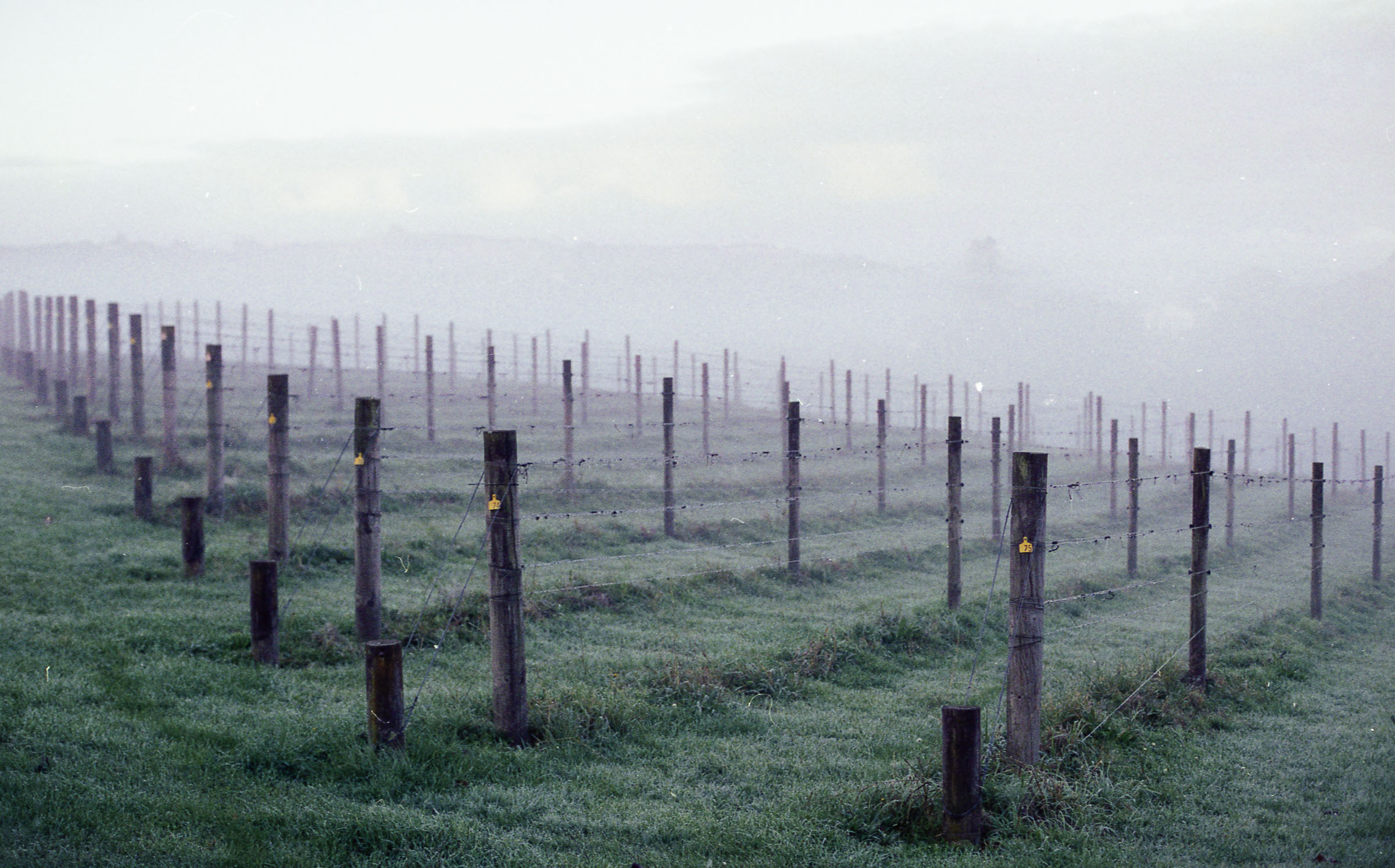 goldie vineyard in fog. copyright leonie wise