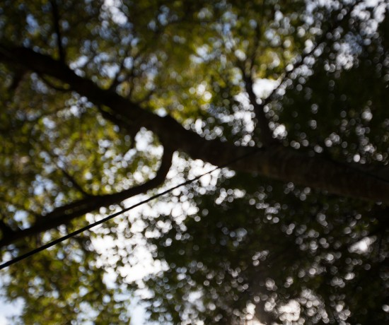Looking up into the trees