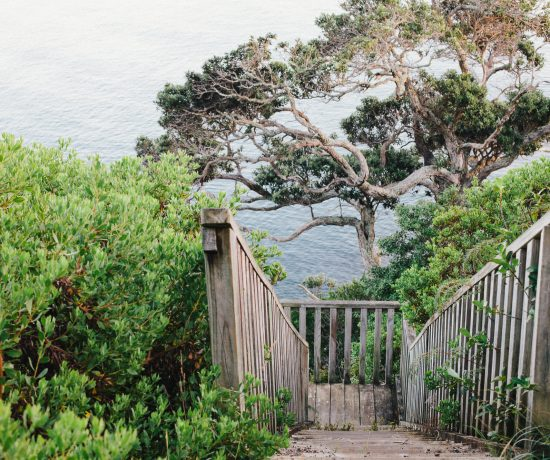 looking down a stairway through the bush to the sea. by leonie wise
