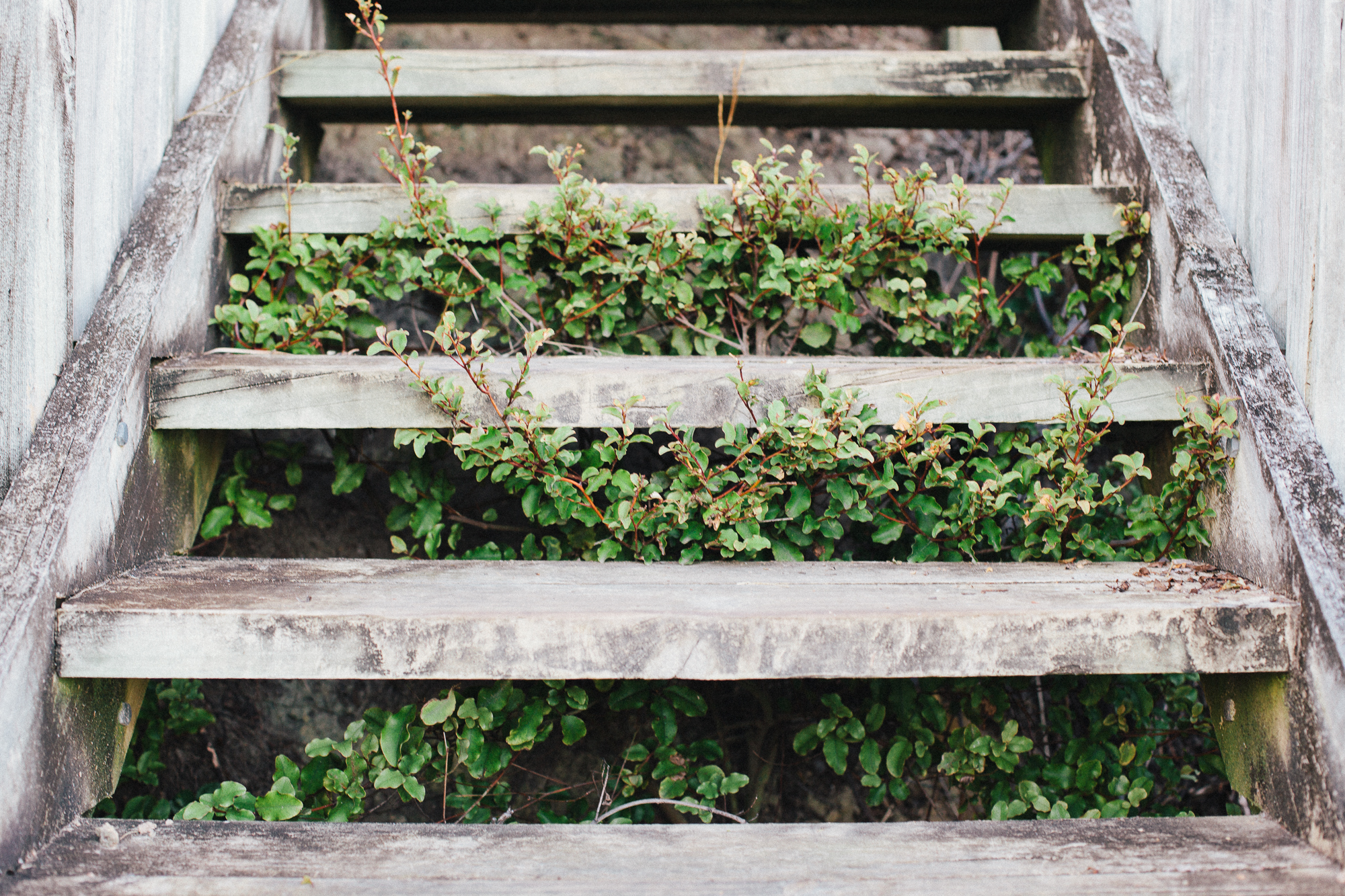 trees growing through stairs. by leonie wise