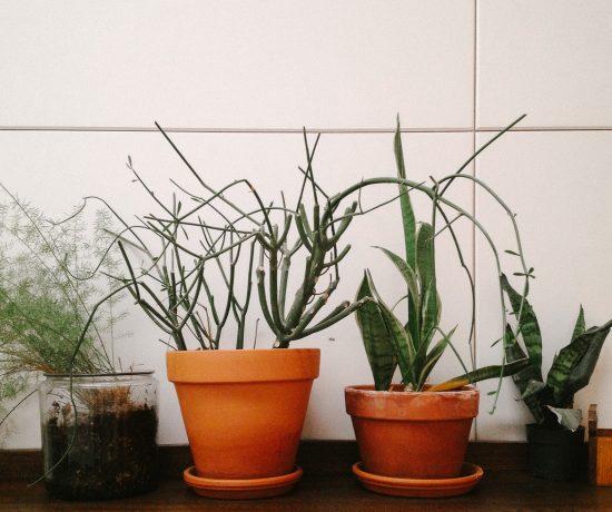PlantLife_byLeonieWise-1