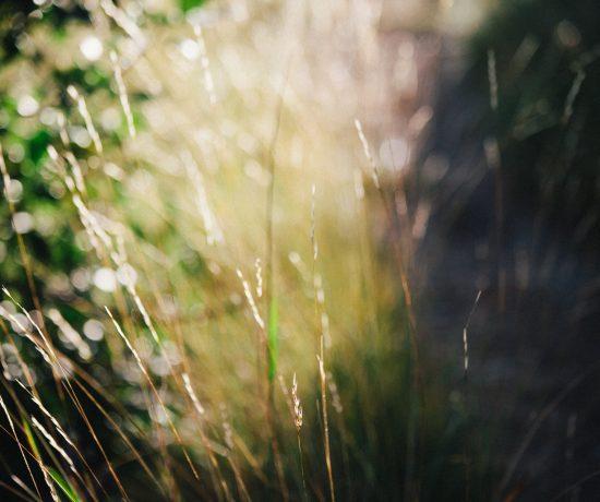 Weekend by Leonie Wise-1