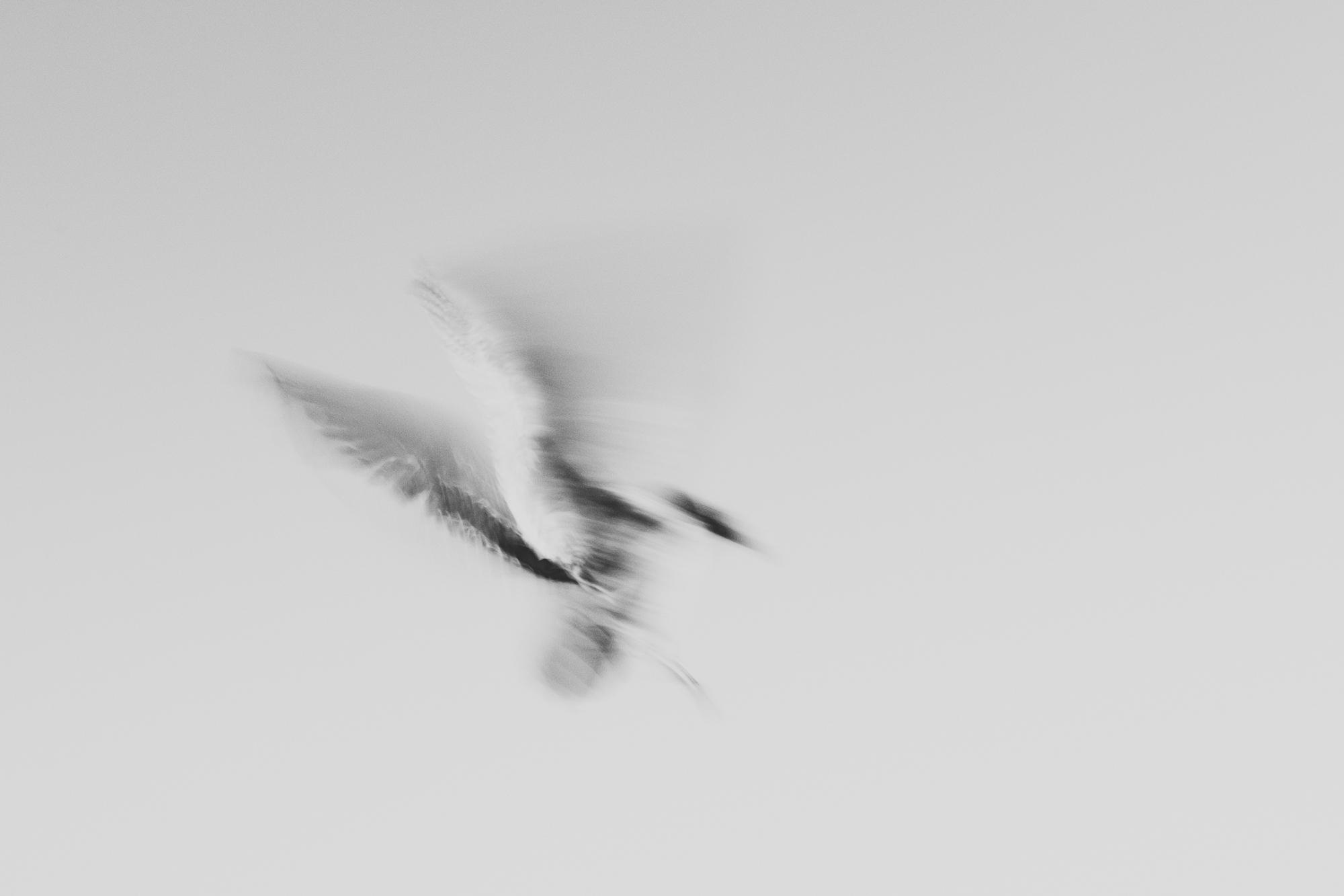 FlyingSpirit_ByLeonieWise