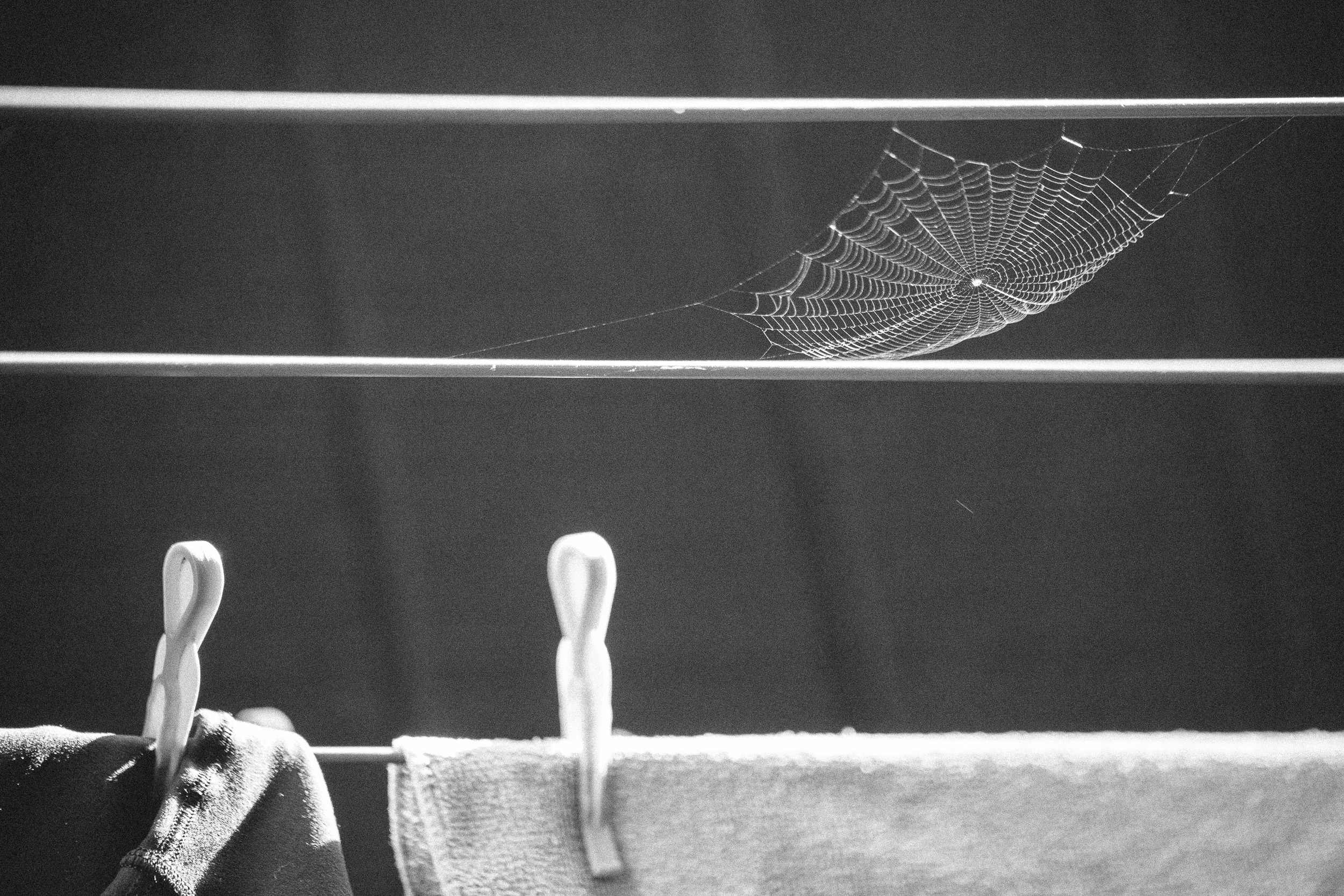 Small spider web on washing line (c) Leonie Wise