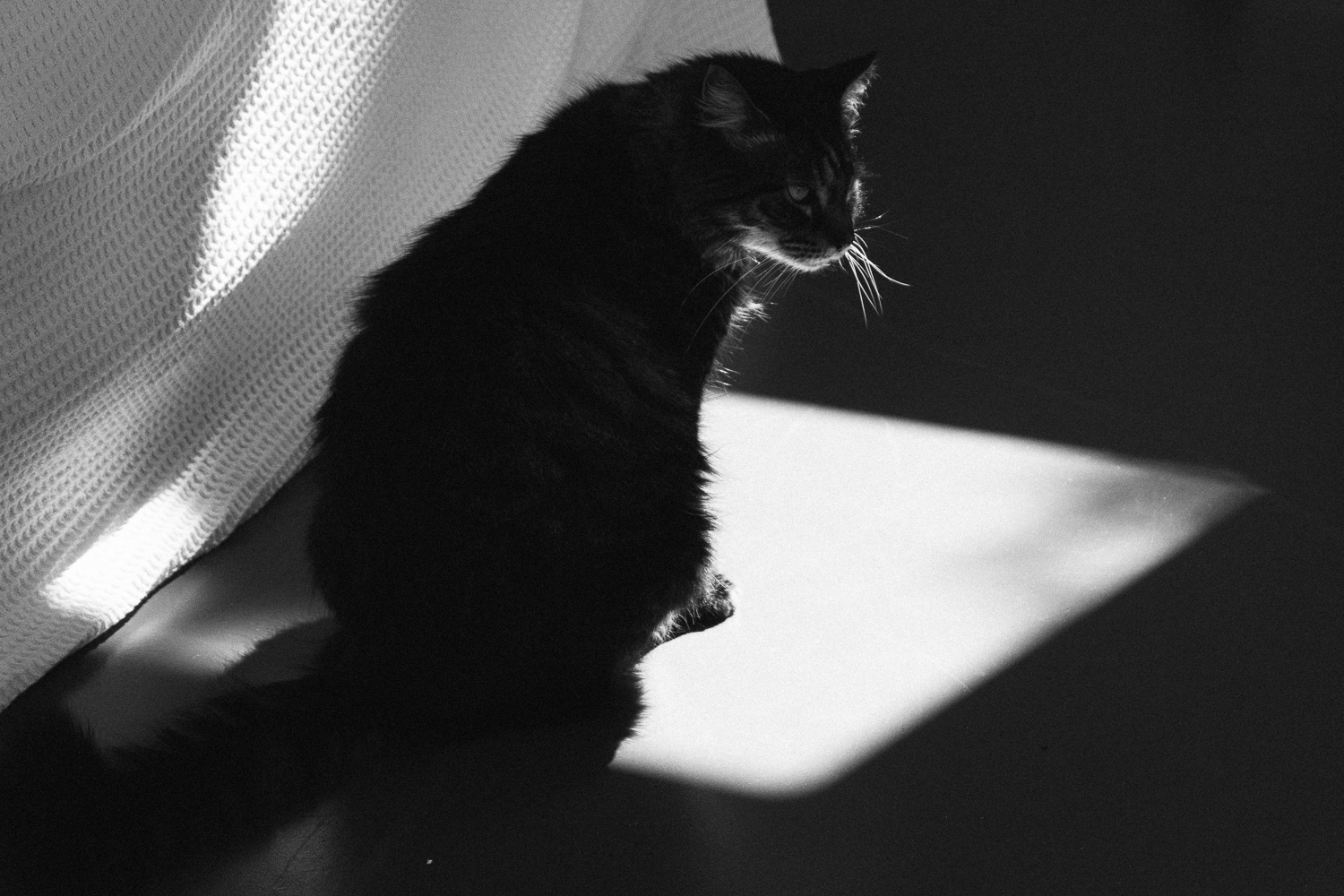 our cat milo, sitting in a patch of sunlight. (c) leonie wise