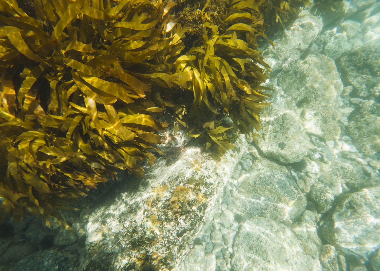 Seaweed underwater. Photo © Leonie Wise